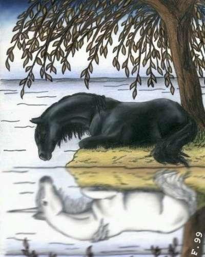 Un cheval noir et son reflet une licorne blanche - Dessin chevaux noir et blanc ...